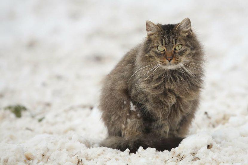 kat die in de sneeuw zit