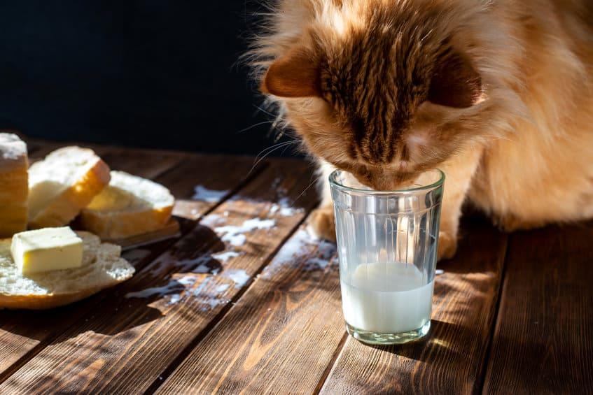 mogen katten melk