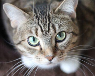 prachtige kat