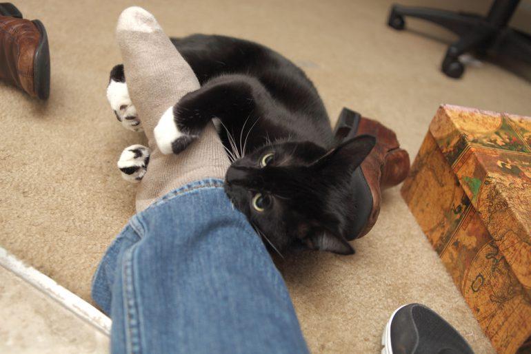 kat bijt in voet