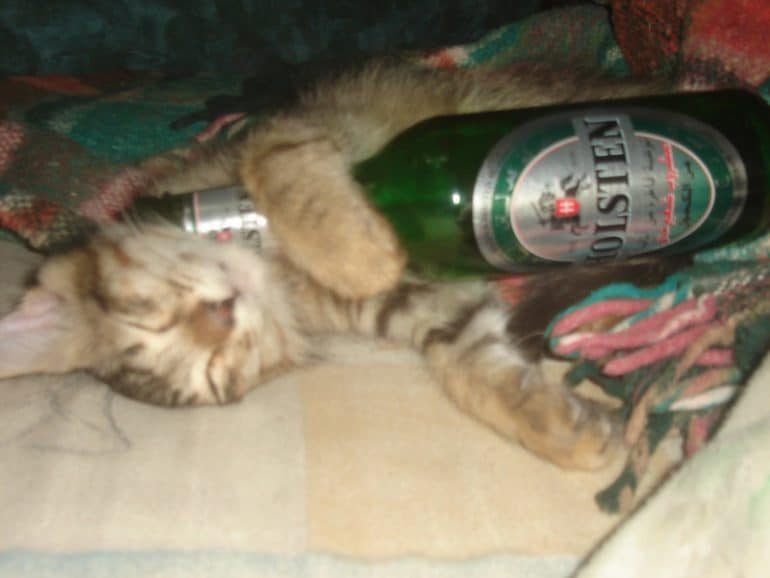 kat en alcohol