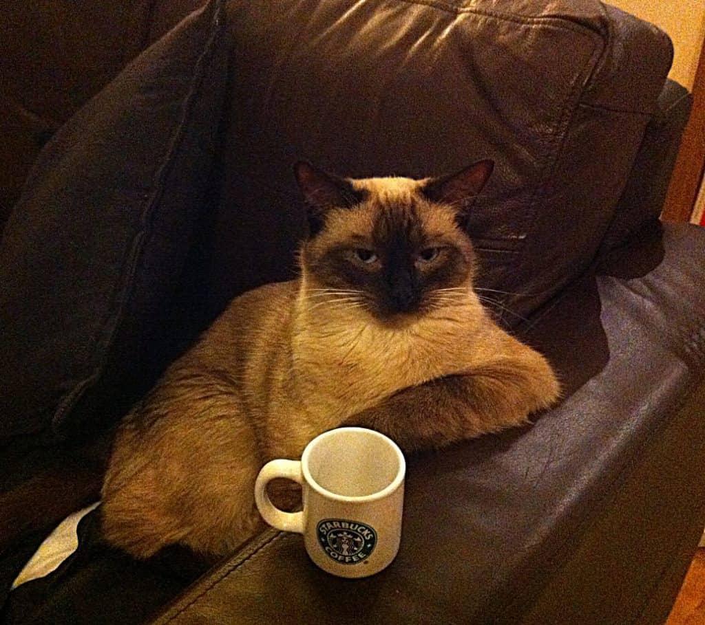 kat en koffie