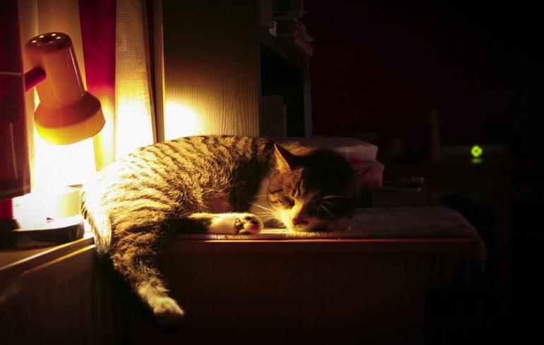 kat in donker