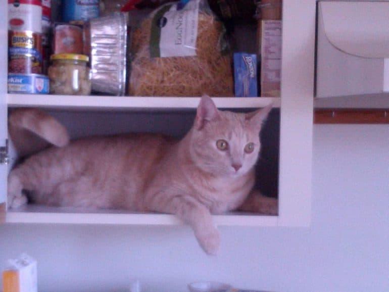 kat in keukenkast