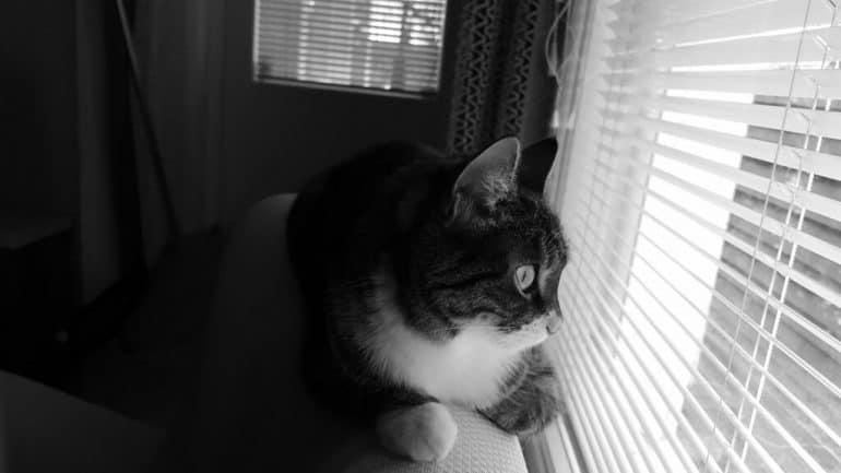 kat kijkt naar buiten