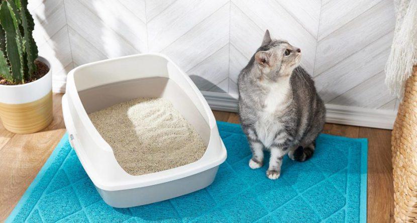 kat naast kattenbak