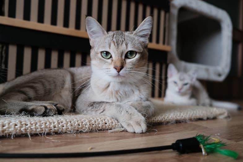 gedragsproblemen kat