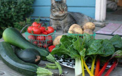katten en groenten