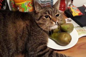katten en peren