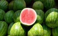 katten en watermeloen