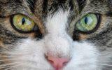 katten en kleuren