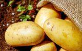 katten en aardappelen