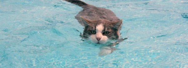kat zwemt