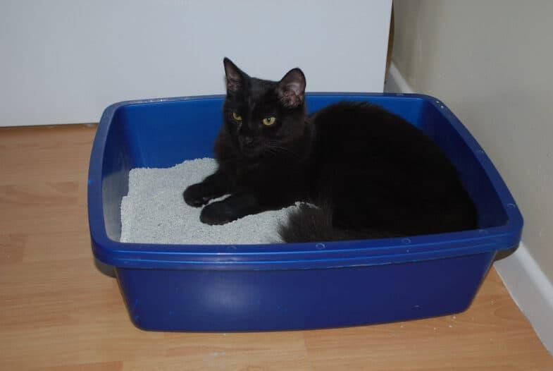 kat in kattenbak
