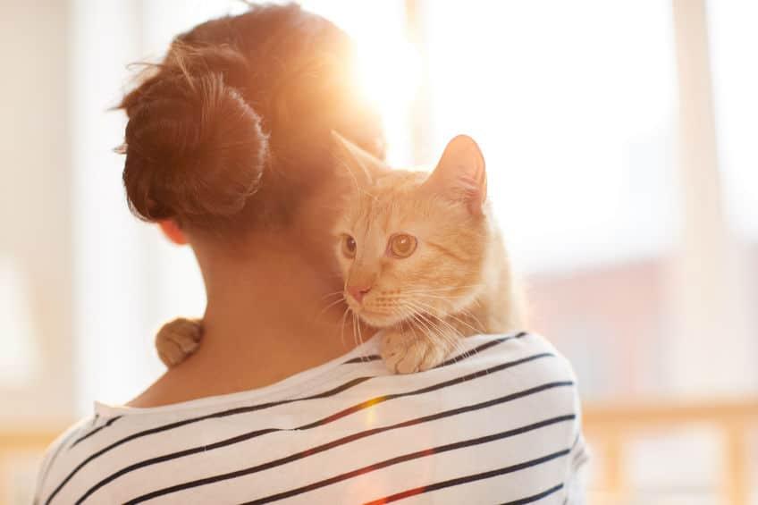 aanhankelijke kat