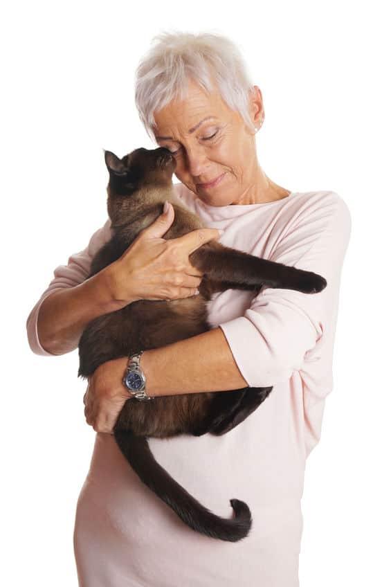 siamese kat in armen bij vrouw