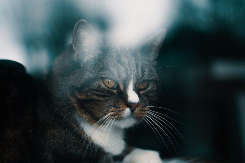 kat bij raam