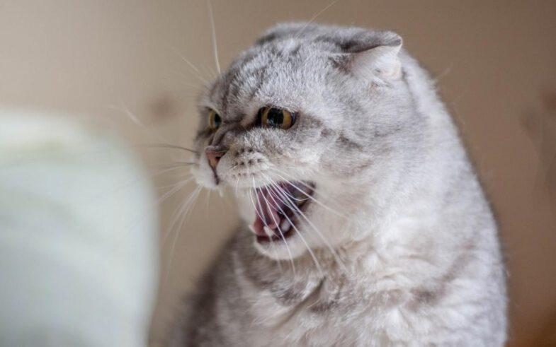 kat dement agressief