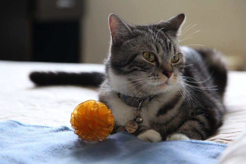 kat op bed met speelgoed