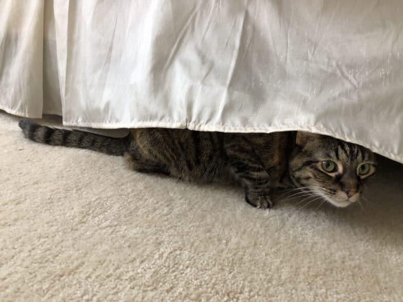 kat verstopt zich onder bed