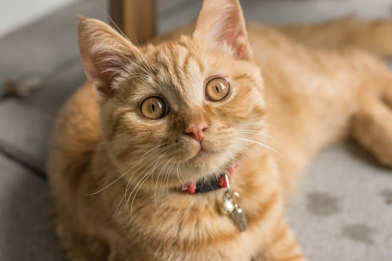 hebben katten emoties