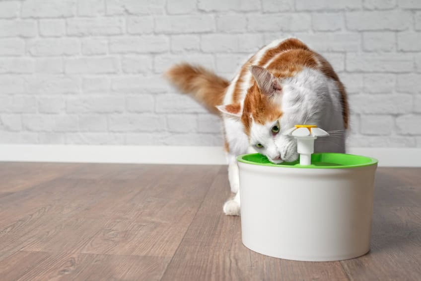 beste drinkfontein kat