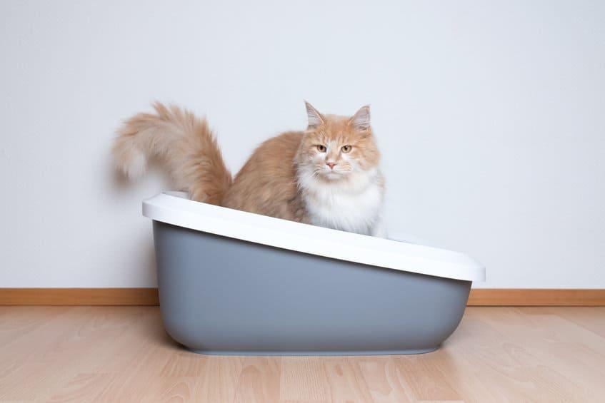 Beste grote kattenbak