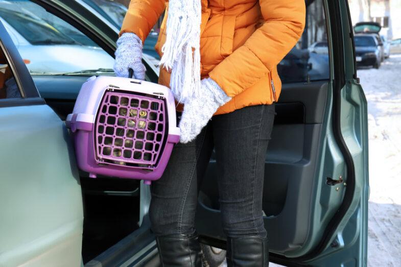 beste kattenreismand auto