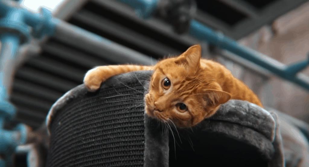 petrebels superdome 120 beste krrabton voor katten